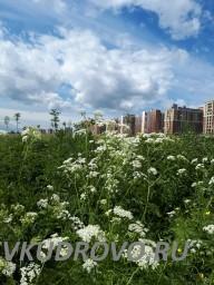 Парк Оккервиль летом