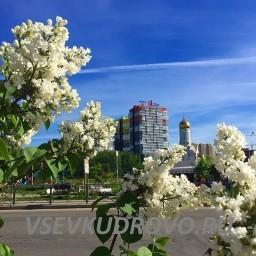 Весна в парке Оккервиль