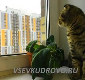 Котики Кудрово
