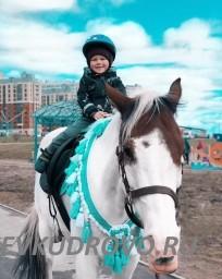 Катания на лошадях для детей в Кудрово парк Оккервиль
