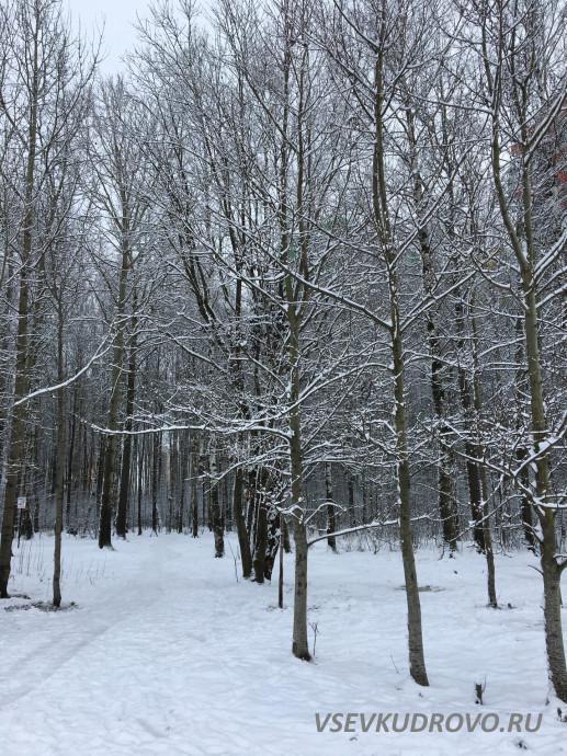 Лесопарк Оккервиль зимой