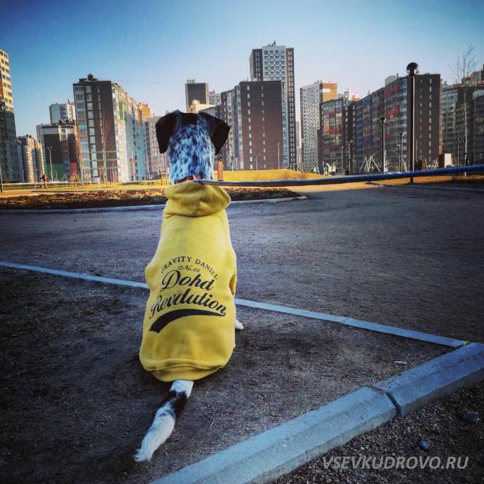 Жёлтые жилеты Кудрово