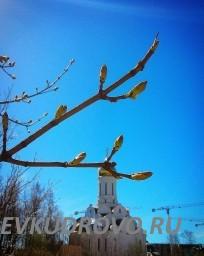 Храм в Кудрово, парк Оккервиль
