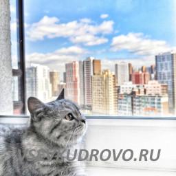 Коты Кудрово