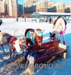Праздник 23 февраля в Кудрово