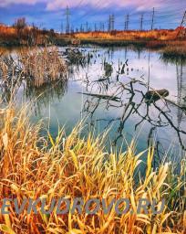 Кудровские болота