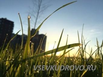 Рассвет в парке Оккервиль