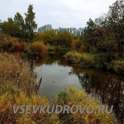 Вид на Кудрово