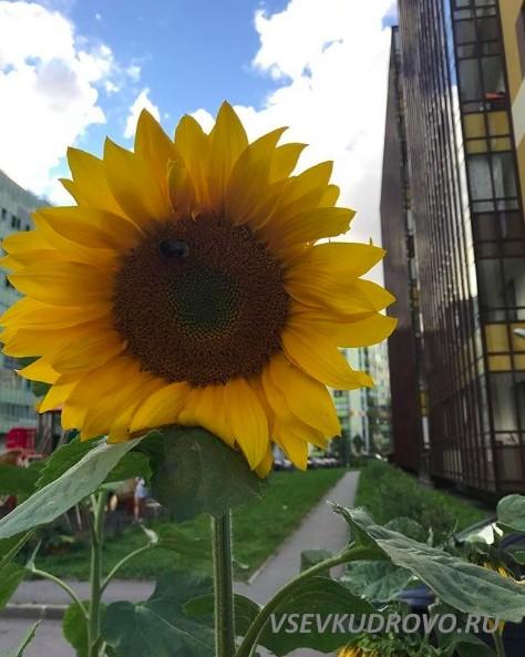 Солнечное Кудрово