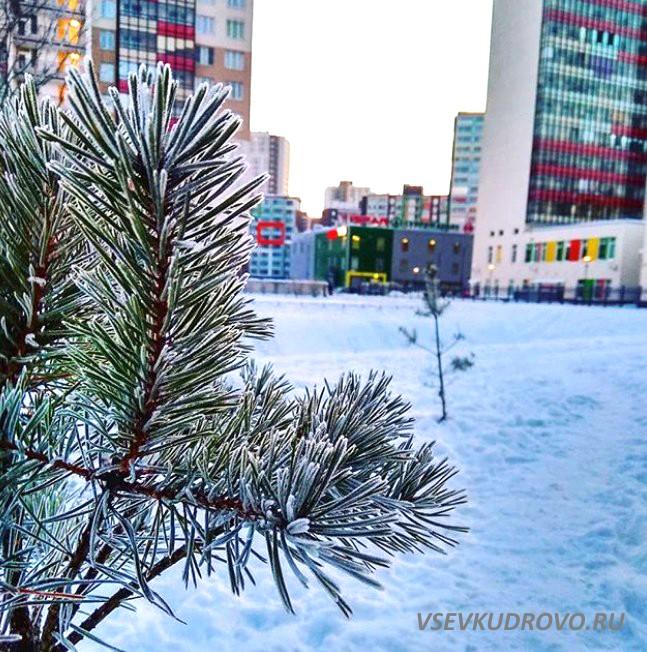 Зимнее Кудрово Фото