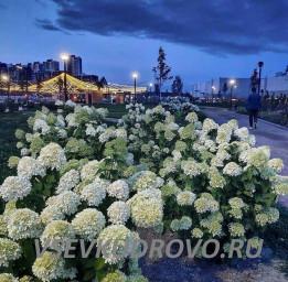Мега парк ночные фото