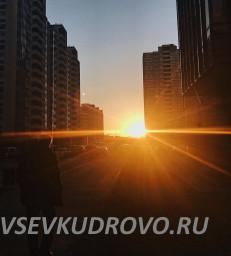 Венская улица Кудрово
