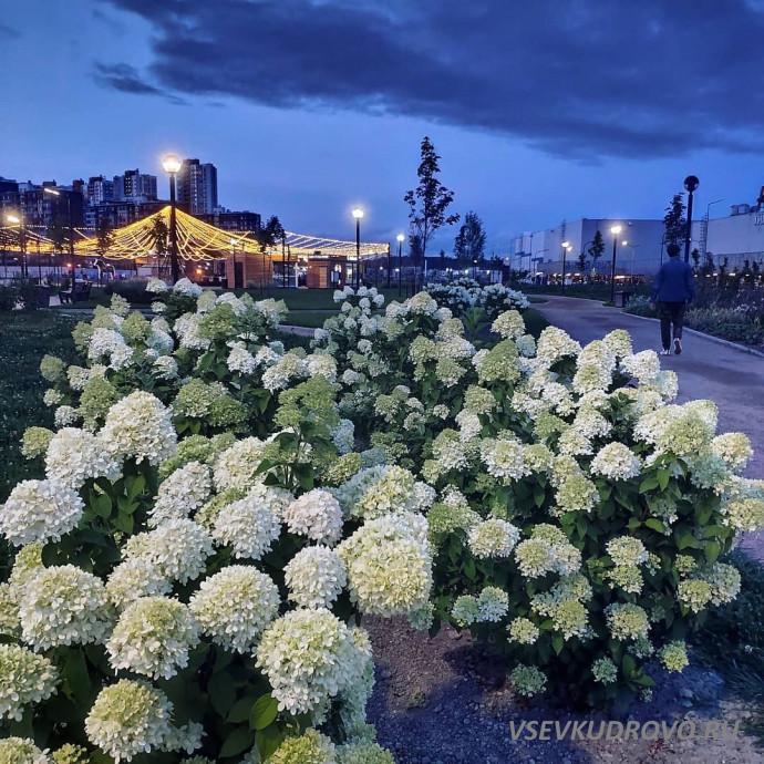 Цветущее Кудрово